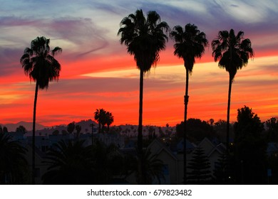 Palm trees in residential Los Angeles over morning colorful sky