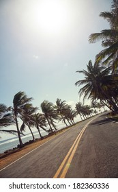 Palm Trees and Road in San Andres, Colombia