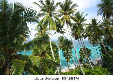 Palm Trees in Sabang Beach at Weh Island