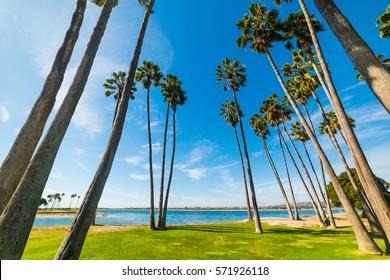 Palm trees in San Diego shoreline, California