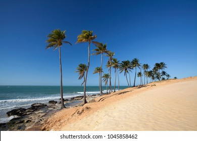 Palm trees and sand dune at Lagoinha Beach, 125 km from Fortaleza, Ceará´s West Coast, Brazil