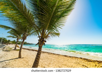 Palm trees and sandy shore in Raisins Clairs beach in Guadeloupe, French west indies. Lesser Antilles, Caribbean sea