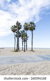 Palm Trees in Santa Monica