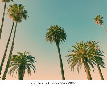 Palm trees in Santa Monica, Los Angeles