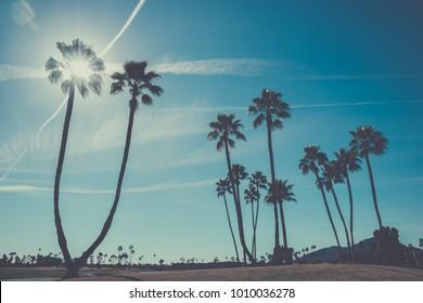 Palm trees in Scottsdale,Arizona,USA