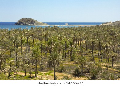 palm trees with the sea behind in Fujairah (United Arab Emirates)
