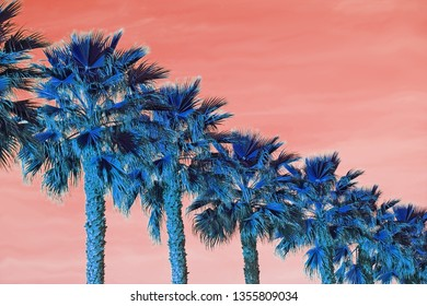 Palm trees seen from below on color dusty orange background