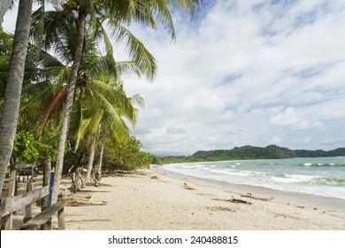 Palm trees shade the beach at quiet Playa Garza in Nosara, Costa Rica