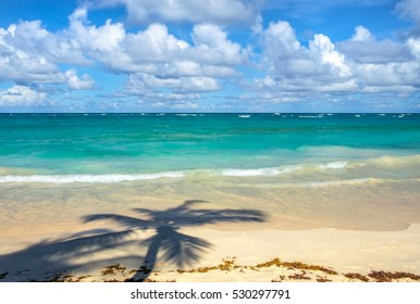 Palm trees shadow on a tropical beach in Punta Cana, Dominican Republic