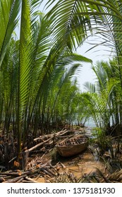 Palm Trees at the Shore of the Thu Bon River in Hoi An, Vietnam