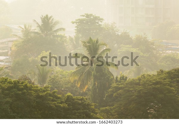palm-trees-shrouded-smog-air-600w-166240