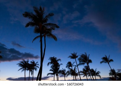 Palm trees in silhouette on the beach at sunset, on Maui, Hawaii, USA