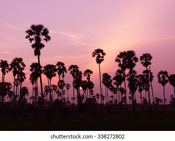palm trees silhouette on sunset background