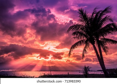 The palm trees silhouette on sunset