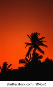 Palm Trees silhouette at sunset, Florida Keys