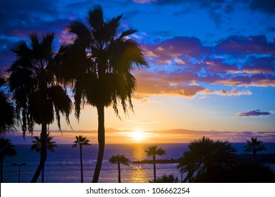 Palm trees silhouette at sunset, Gran Canaria, Spain