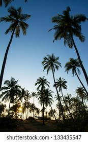 Palm trees silhouette at the sunset, India