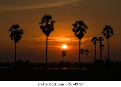 Palm trees silhouette at sunset of Thailand