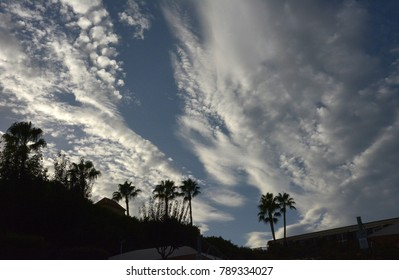 Palm trees silhouetted against cloudy sky.