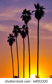 Palm trees silhouetted against late afternoon sun