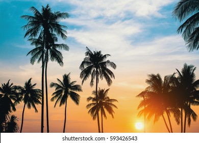 Palm trees silhouettes during sunset.