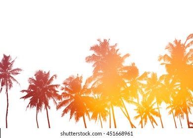 Palm trees silhouettes isolated on white with double exposure effect