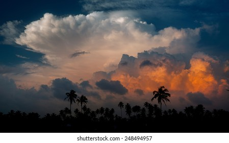 Palm trees silhouettes on the sunset cumulus clouds