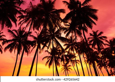Palm trees silhouettes on tropical beach at vivid sunset time