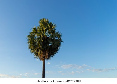 Palm trees ,sky background