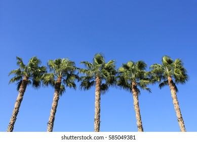 palm trees and sky in Cyprus