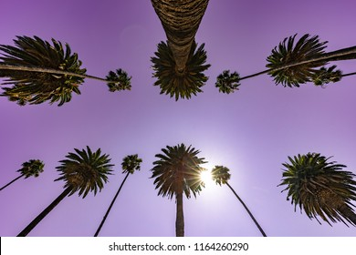 Palm trees and sky in Los Angeles
