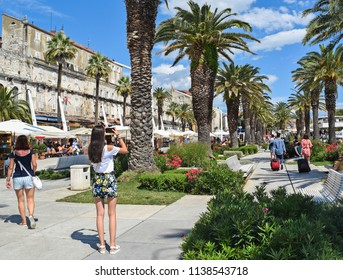 Palm trees in Split city, Croatia