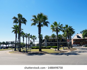 Palm Trees in St. Augustine Florida at Traffic Circle