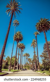 Palm trees street in Beverly Hills, Los Angeles