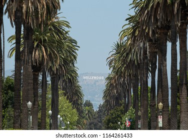 Palm trees street and hollywood sign