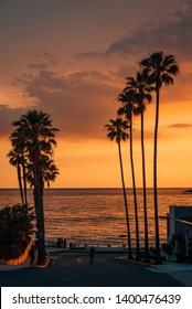 Palm trees and street at sunset, at Windansea Beach, in La Jolla, San Diego, California