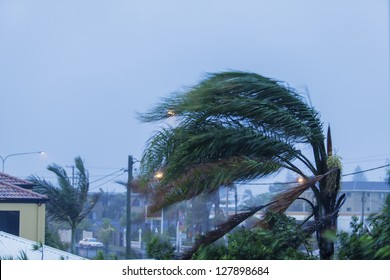 Palm trees in suburbs during cyclonic weather