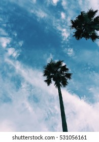 palm trees, summer, cool