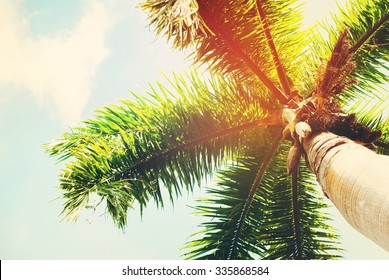 Palm Trees in Sun Light, Background Toned under Retro. Holiday Travel Card