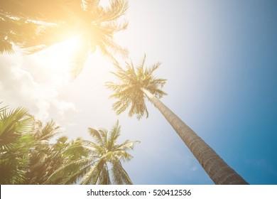 Palm Trees Sun Light Hot Equator Nature Landscape Tropical Background Holiday Travel Design Toned Shabby Vintage Effect