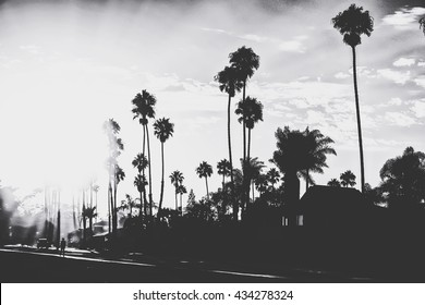 palm trees with sunlight in black and white