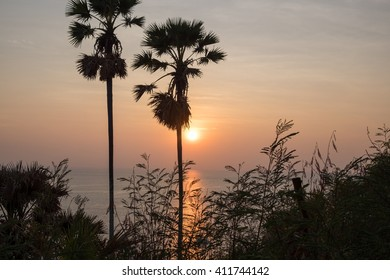 palm trees with sunset