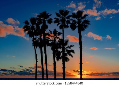 palm trees at sunset in California United States in Santa Monica County