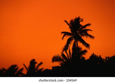 Palm Trees at sunset with colorful sky, Florida Keys