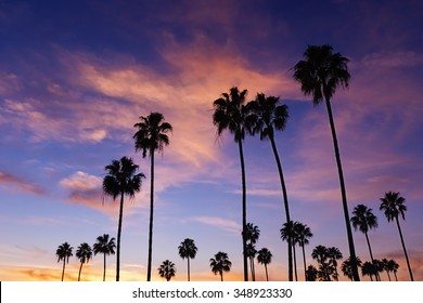 Palm trees in Sunset, Corona Del Mar Beach, California.