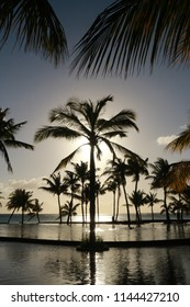 Palm trees sunset, Mauritius.