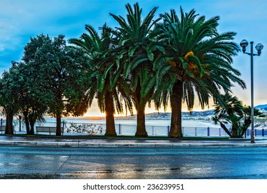 Palm trees at sunset, Nice, France