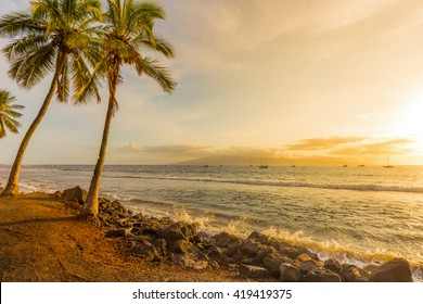 Palm Trees at Sunset on a Tropical Island at Golden Hour