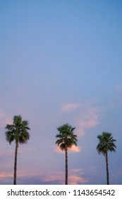 Palm trees in sunset sky.