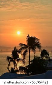 Palm trees and sunshine in Manzanillo Bay, Mexico.